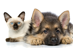 Osteopathy & Physiotherapy for Animals